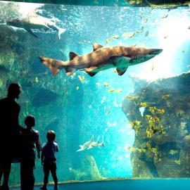 Аквапарки и океанариумы Парижа: Синеаква, Порт-Доре, парк Аквабульвар