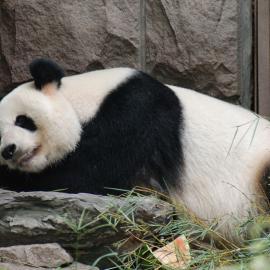 Пекинский зоопарк (Китай): животные, Дом гигантской панды, океанариум