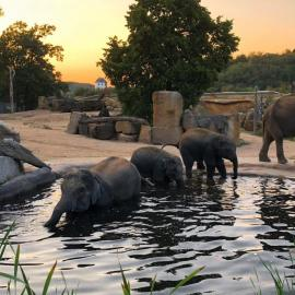 Пражский зоопарк (Чехия): аттракционы и развлечения
